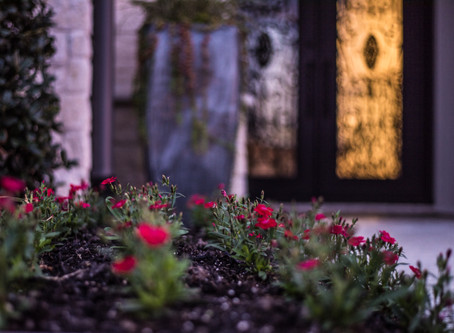 Add Color to Your Landscape This Winter