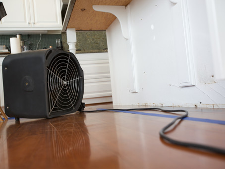 Frequently Asked Questions: Will Mold Return After Remediation?