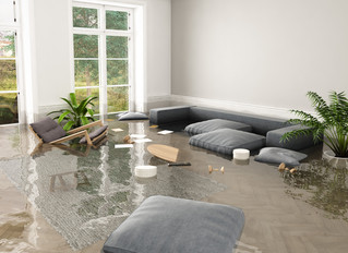 Mold Growth in Your Carpet From Water Damage