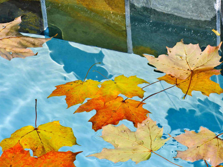 Keeping Your Pool Clean During Fall