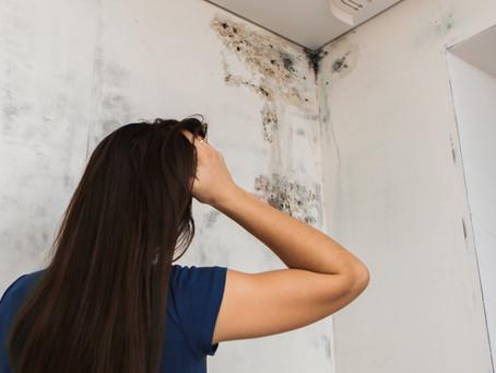 Repair Roof Leaks Immediately