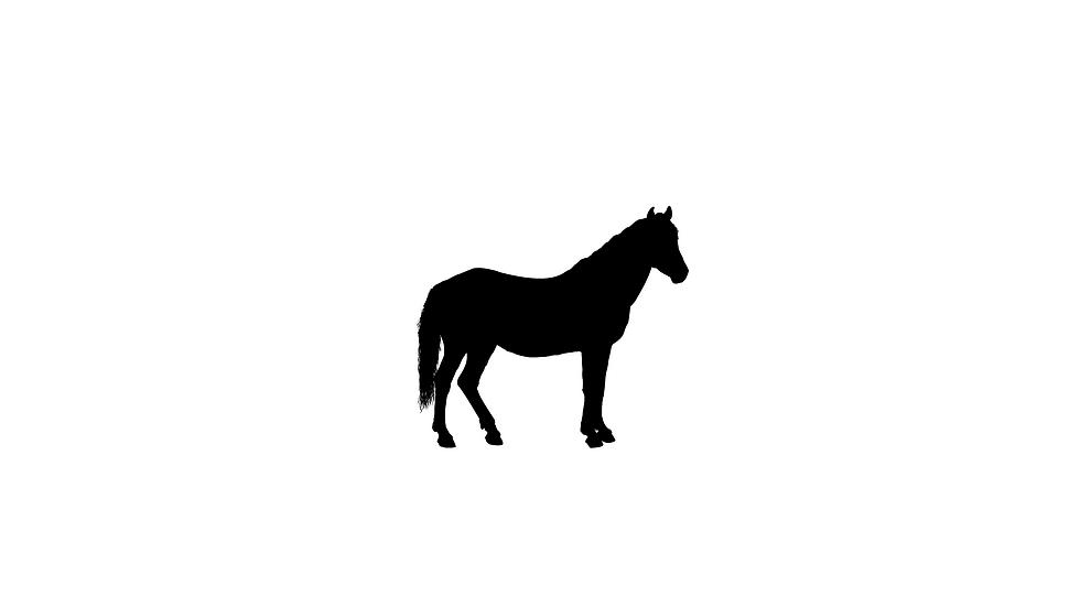 Horse Decals