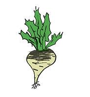 parsnip.jpg