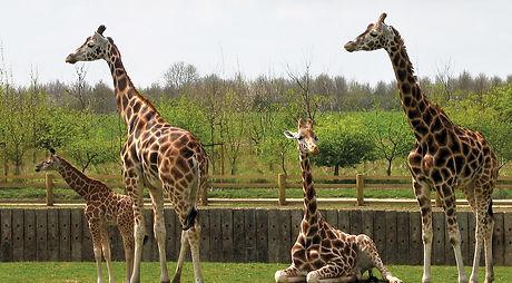 Banham-Zoo-WEB.jpg