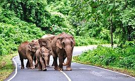 thailand-khao-yai-national-park-exploring-visitors-guide-wildlife-watching.jpg