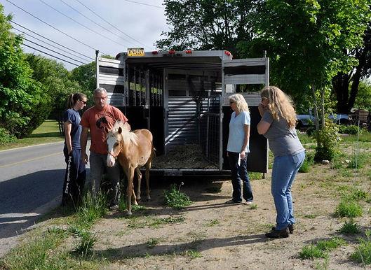 Humane Animal Rescue No Kill Shelter - Cape Cod MA