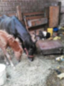 Donate to a MA non-profit, 501c3 animal rescue shelter