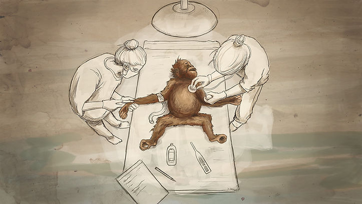 Sumatra Orangutan Conservation Program Animation Illustration