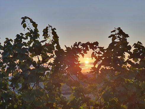 Fokus Sonne in Weinreben Heppenheim.jpg