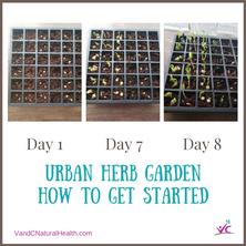 Urban Herb Garden – Part 1: Getting Started
