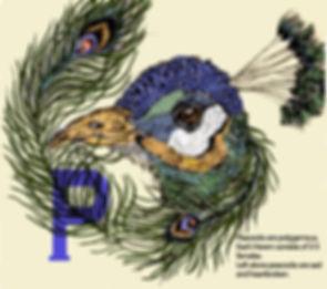 peacock edit.jpg