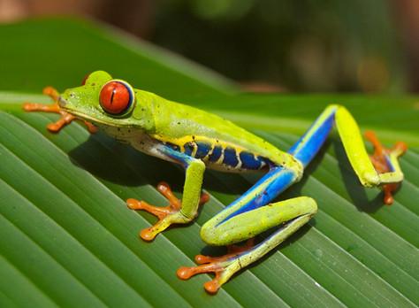 Explore Beaches & Jungles of Costa Rica!