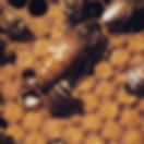Sugar Bottom_Bees Close Up.jpg