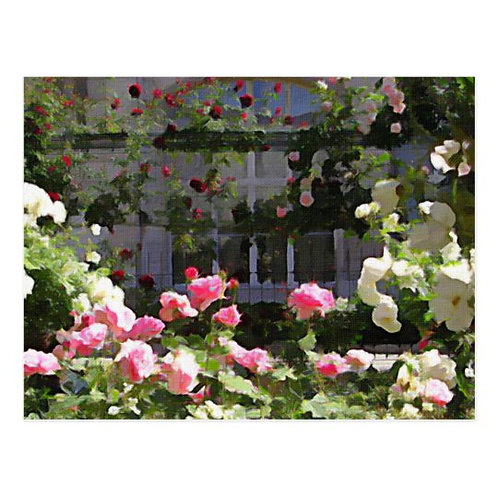 Paris Rose Garden Postcard