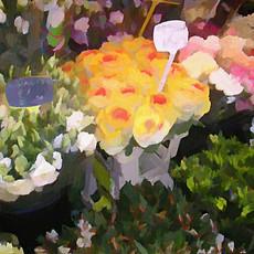 Paris Flower Market II (Square)