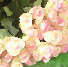 Paris Flower Market V (Square 3)