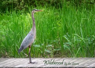 Wildwood by the severn-2.jpg