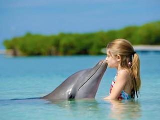 Как работает дельфинотерапия?