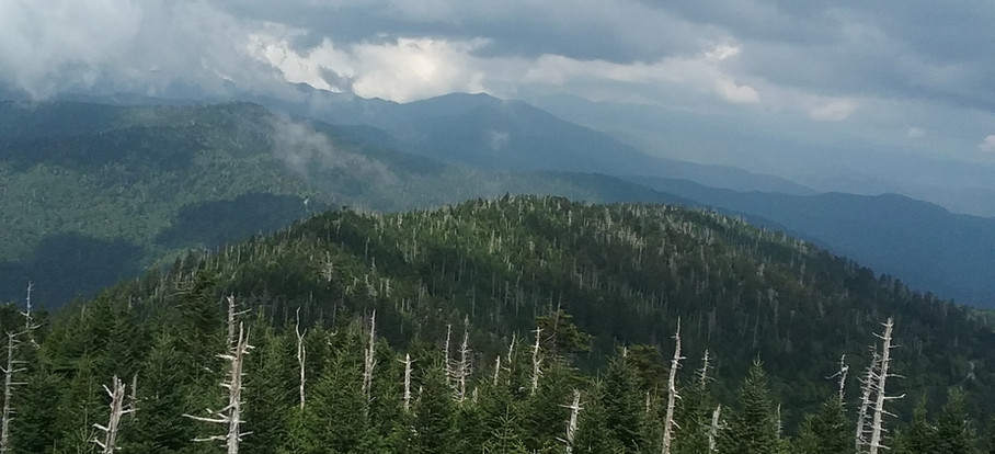 NC's spruce-fir forests