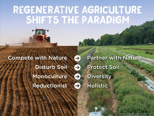 Regenerative Agriculture:                     Going Back to Basics
