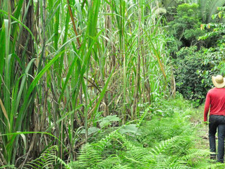 Preventing the spread of COVID-19 in the Mexican sugarcane sector