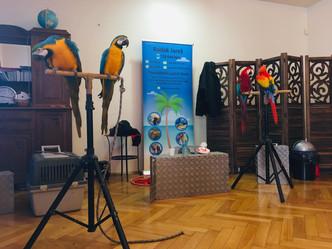 Papouščí show v Julii