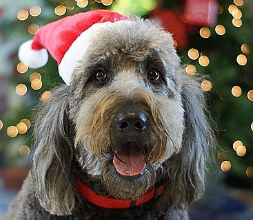 CHRISTMAS DOG ACE HARDWARE.jpg