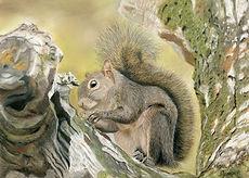 Squirrel Card.jpg