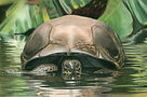 Turtle Copywrite copy.jpg