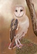 Owl No 2 Pastel 40 x 28cm  Photo Ref David Stribbling