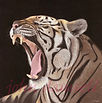 Tiger  Copywrite copy.jpg