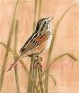 Swamp Sparrow 19.68cm x 22.86cm watercolour  £75.00