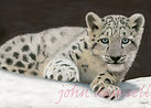 Snow Lepard Cub copy write.jpg