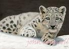 Snow Lepard Cub copy write.jpg