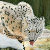 Snow Leopard Pastel £250 Not Framed