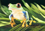 Frog Copywrite copy.jpg