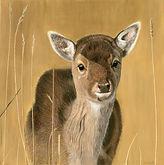 Young Doe Deer Reduced.jpg