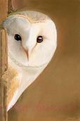 Owl Pastel £295 Frame