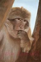 Monkey Time Pastel £200 Framed
