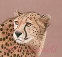 Cheeta_edited-1.jpg