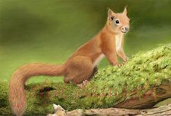 Squirrel Nutkin Framed 880 x 700cm £395 Framed