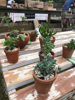 cactus2017-12-20 at 11.26.53