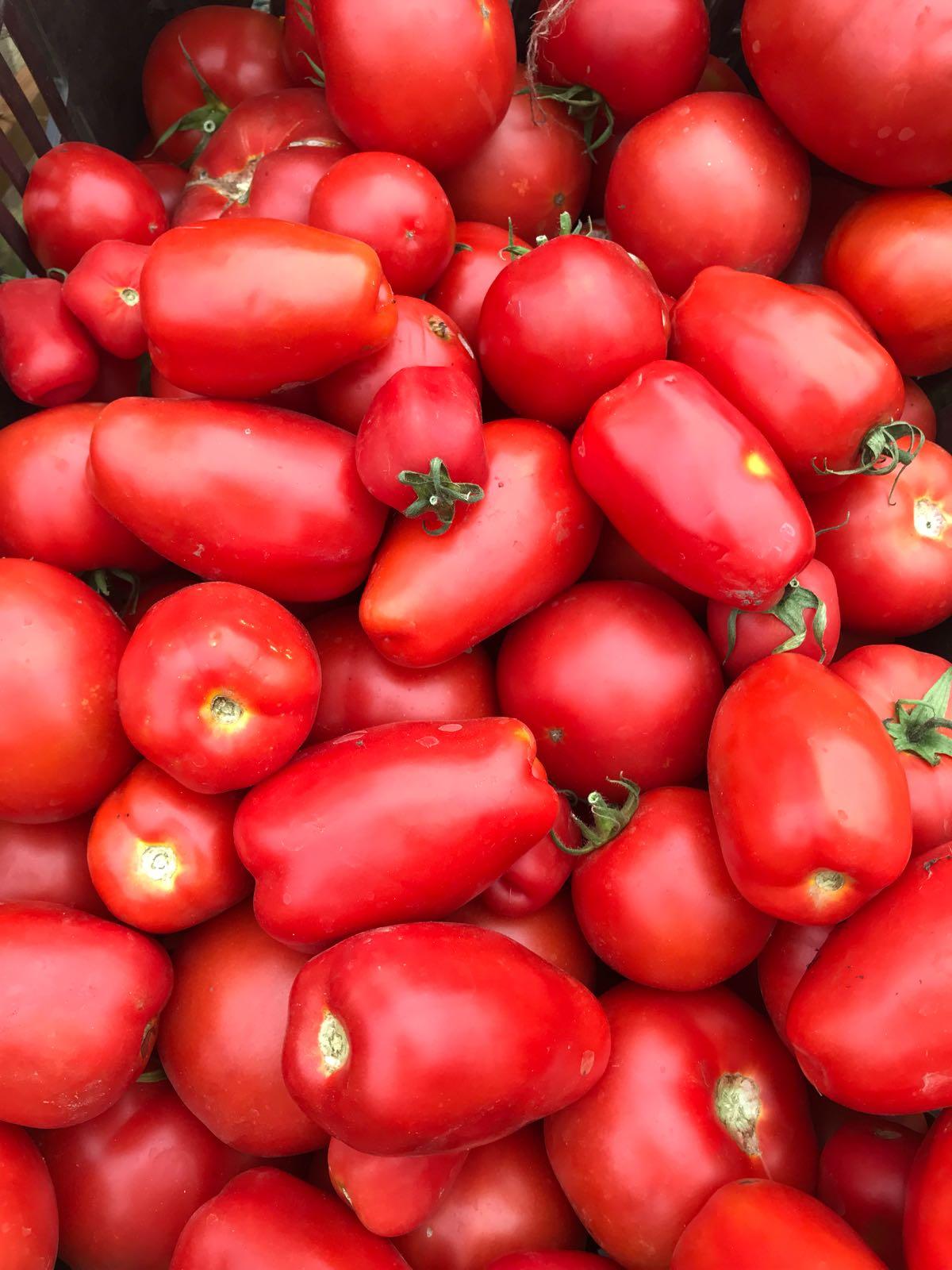 tomates22017-12-20 at 11.26.55