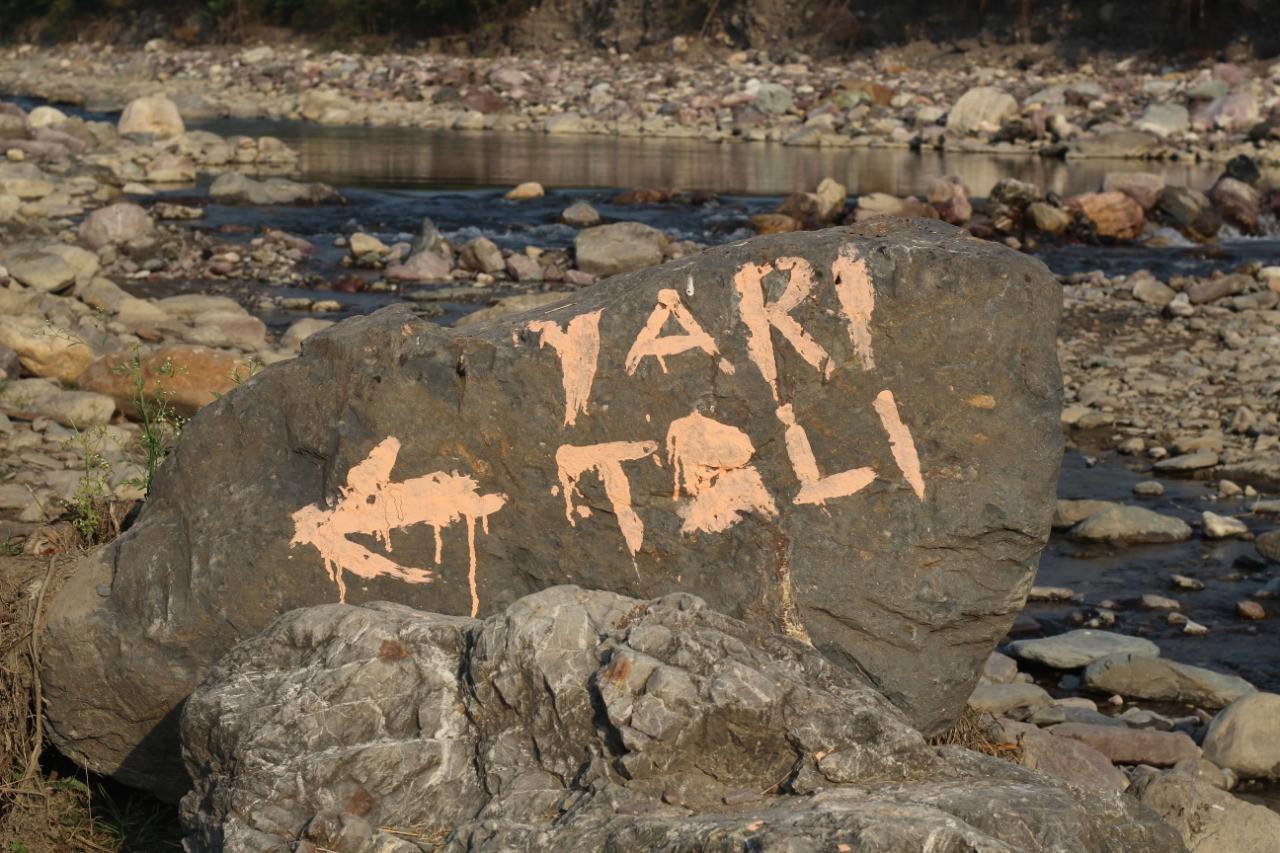 YariToli (25).jpeg