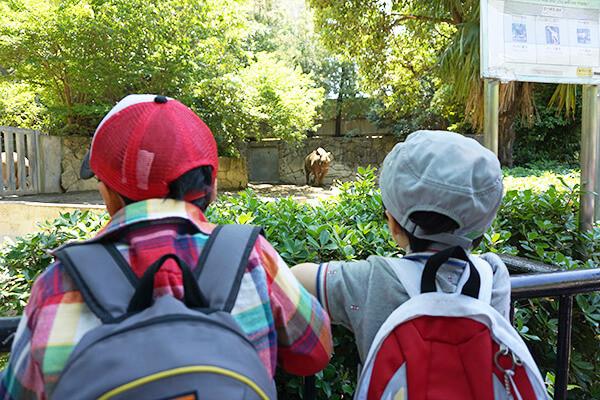 上野動物園遠足7
