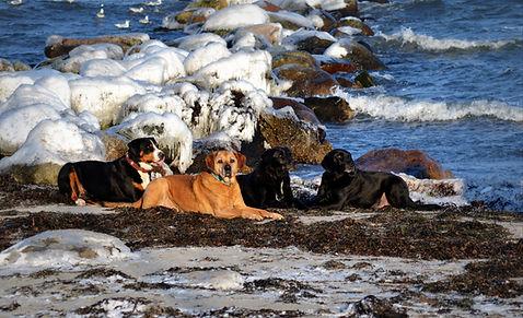 Hundetraining Kiel