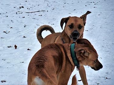 Hunde Kiel
