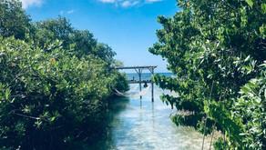 5x de mooiste stranden van Aruba