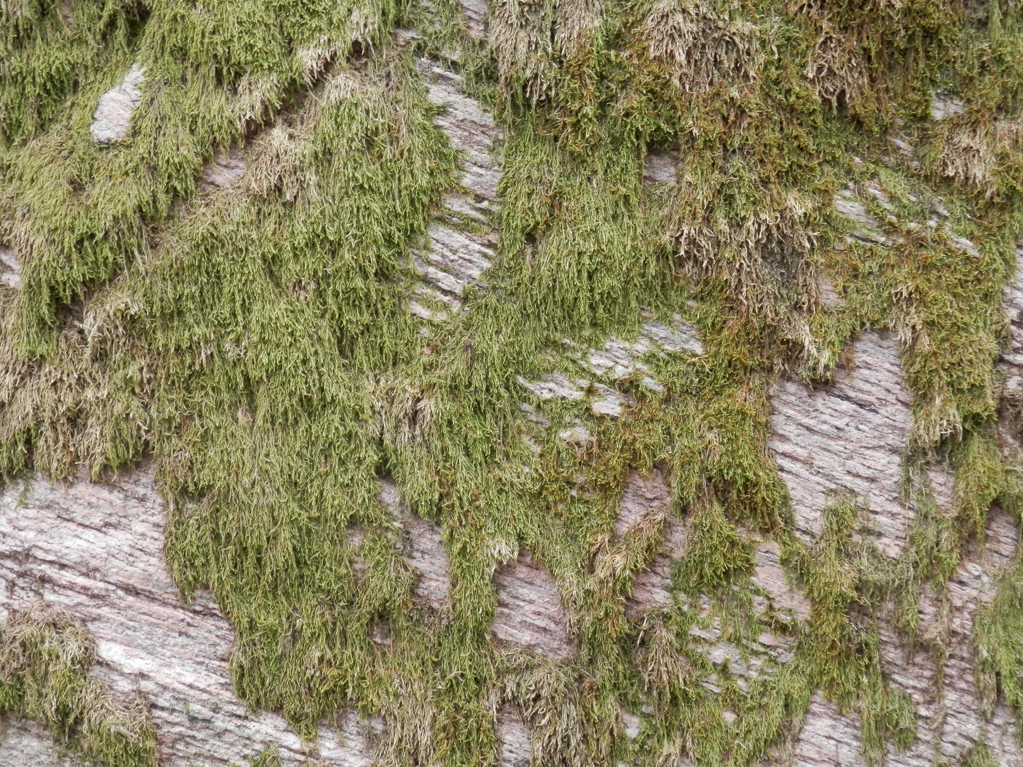 mousse et roche