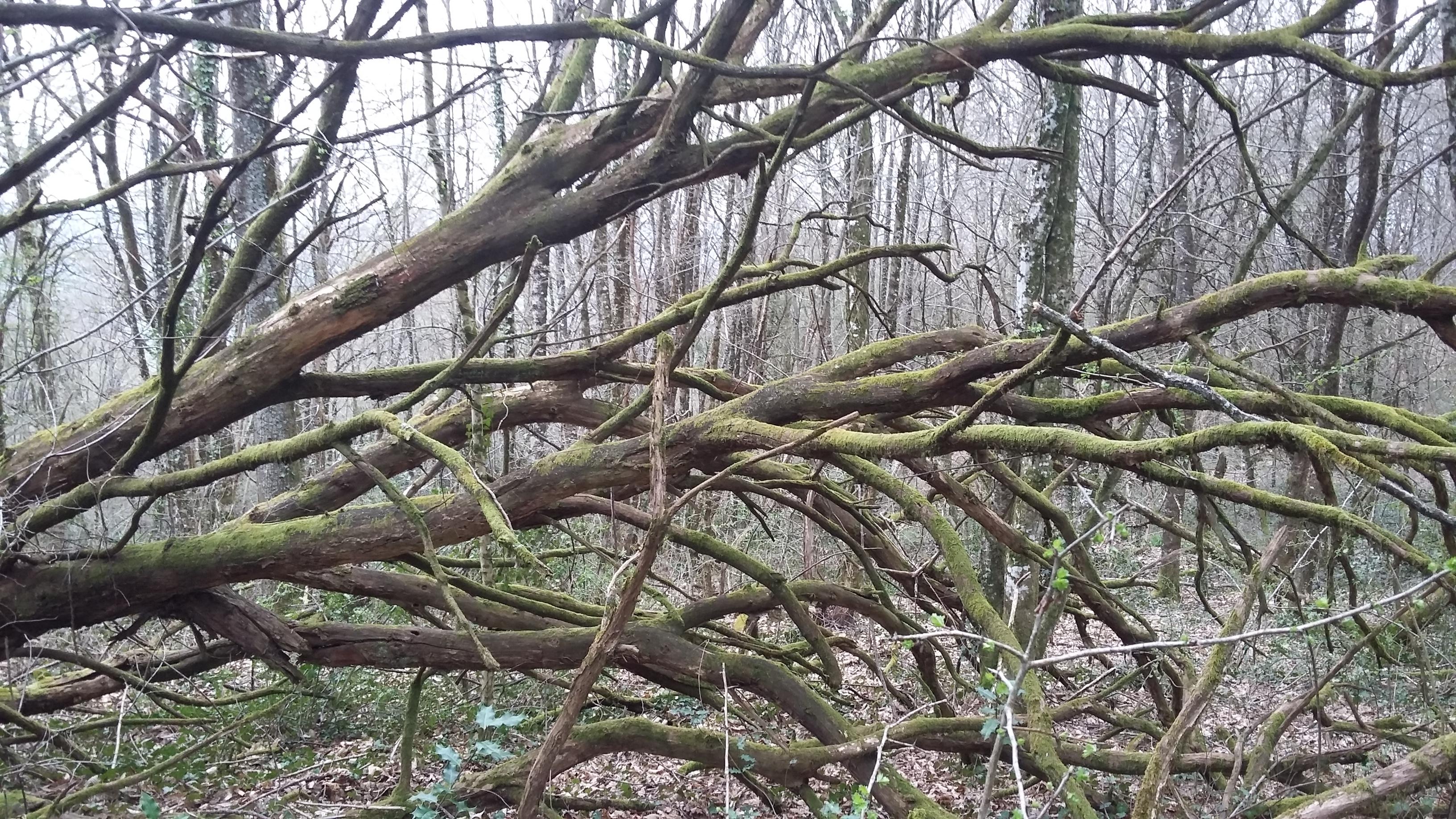 arbre à fees